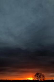 Закат светится на горизонте с одиноким деревом естественного фона