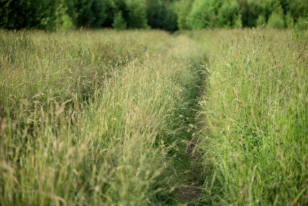 厚い草の間でフィールドを介して地上道路