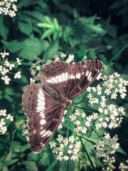 花の上に座って蝶のクローズアップ