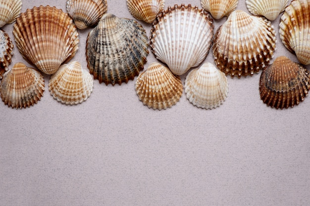 貝殻の背景。ベージュの貝殻のコレクション