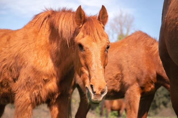 春に野生の馬の横にある緑の草のパドックで目がない茶色の古い馬を放牧