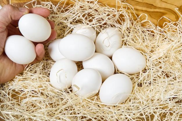 白い卵の巣。男性の手が巣から鶏の卵を収集