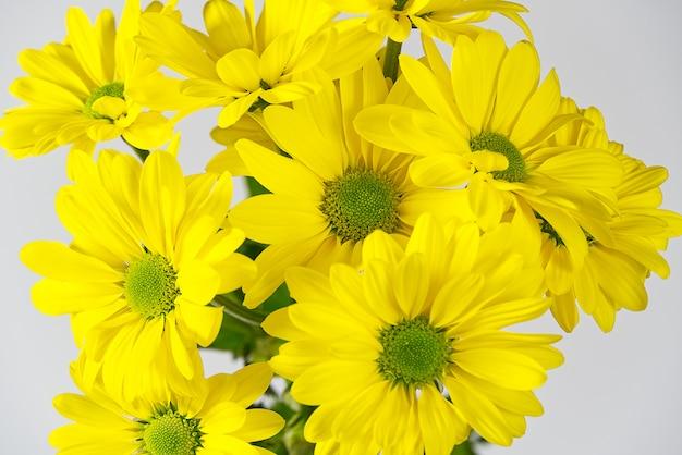 美しい新鮮な黄色の菊、クローズアップショット、黄色のヒナギクの花。セレクティブフォーカス