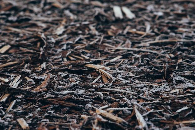 朝霜で覆われた天然の樹皮