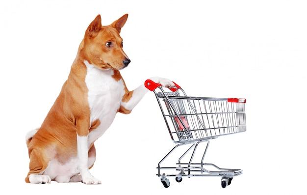 白い座って、ショッピングカートを保持しているバセンジー犬
