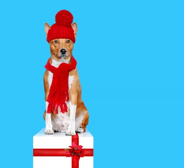 Желтая собака в красной вязаной шапке и шарфе сидит на белой коробке