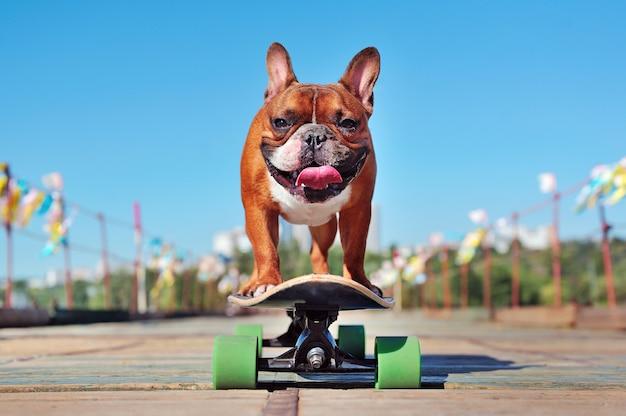 晴れた日にロングボードでスケートフレンチブルドッグを笑顔