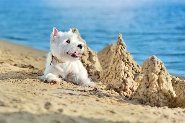 砂の城の隣に横たわる白いかわいい犬