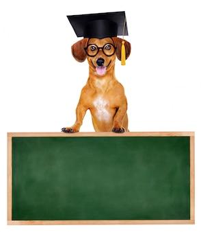 Такса собака в ступке доска стоит на школьной доске