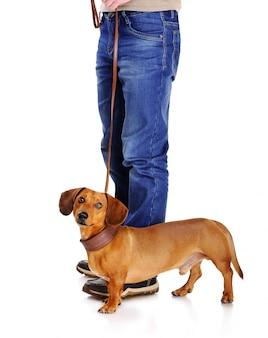 飼い主と散歩に行く準備ができている犬