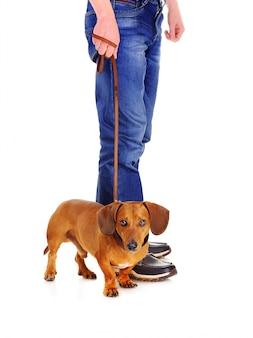 飼い主の隣に立っている犬