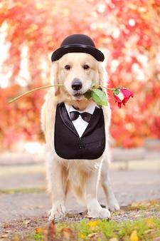 バラを提示する犬の全身写真
