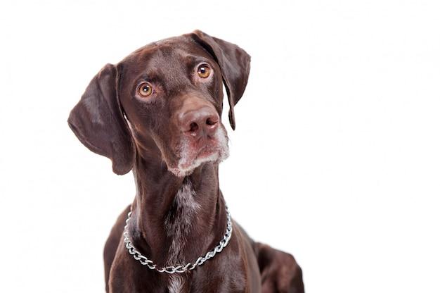Собака смотрит с интересом выстрелом в голову