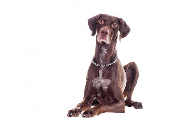 床に横たわっている犬の正面写真
