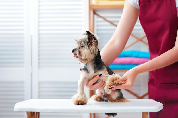 グルーミングスペシャリストがグルーミングサロンで犬の爪を切る