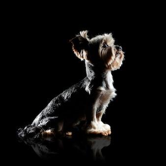 見上げる犬の側面図シルエット