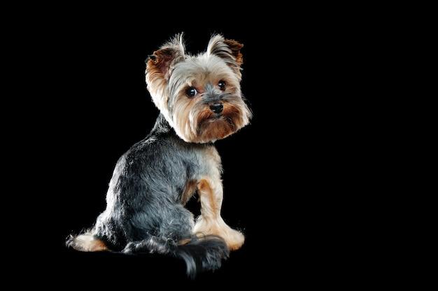 肩越しに回す犬の後ろからの眺め