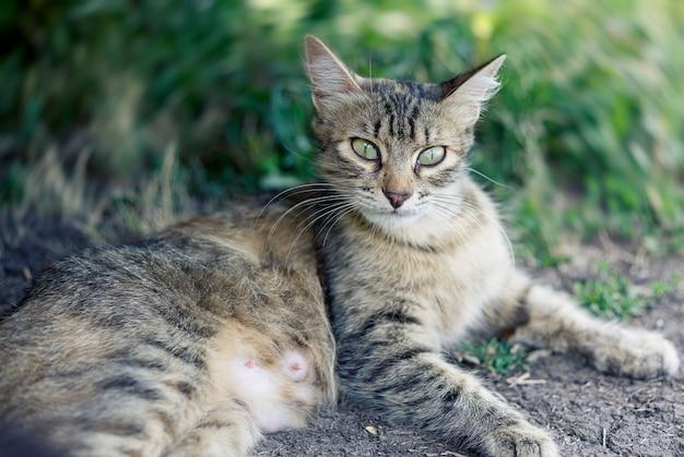 Красивый милый кот с зелеными глазами.