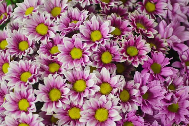 ピンクのデイジーの花の花束