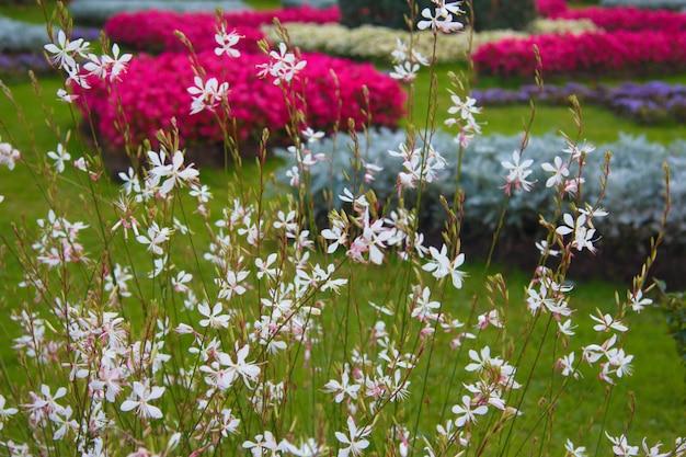 夏の都市公園の花