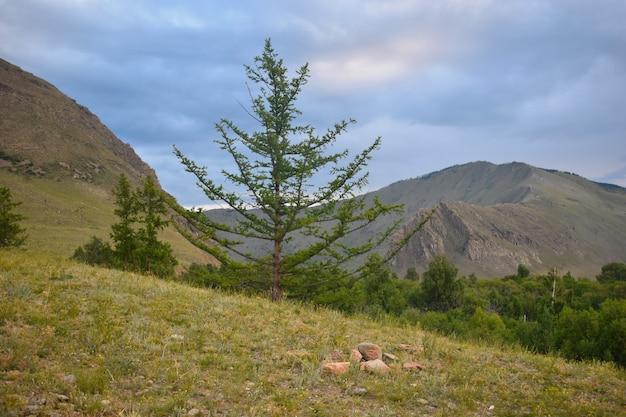 緑の木々と山の風景