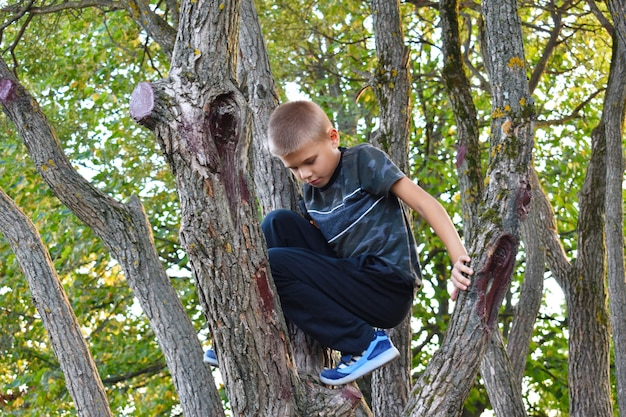 少年が木に登る。新鮮な空気の元気な幸せな子供時代。