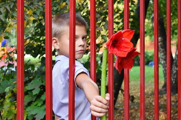 少年はフェンスを介して赤い花を与える