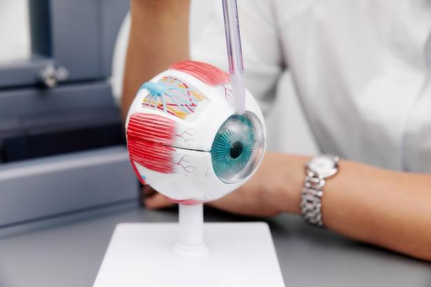拡大された解剖学的眼モデルと実験室サンプラー
