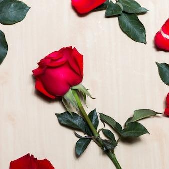 赤いバラとテーブルの上の花びら