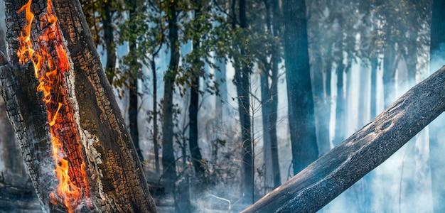 森林火災災害は人間によって引き起こされて燃えています