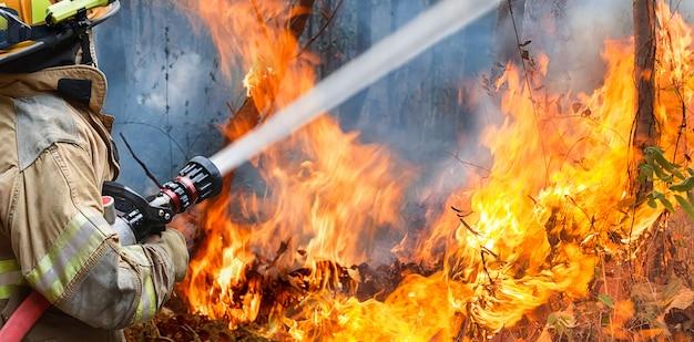 Пожарные разбрызгивают воду на лесной пожар