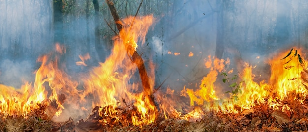 アマゾンの熱帯雨林の火災災害は、科学者がこれまで見たことのない速度で燃えています。