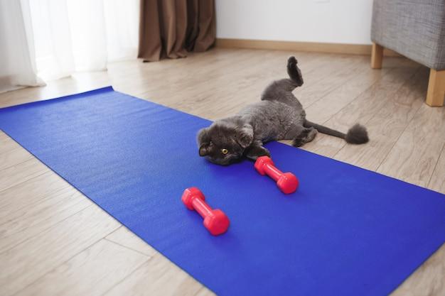 Милый кот играет с гантелями фитнес на полу