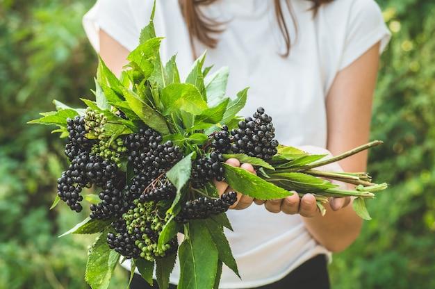 女の子は庭(サンブクスニグラ)のクラスター黒フルーツエルダーベリーを手に保持します。長老、黒長老。ヨーロッパの黒いエルダーベリーの背景