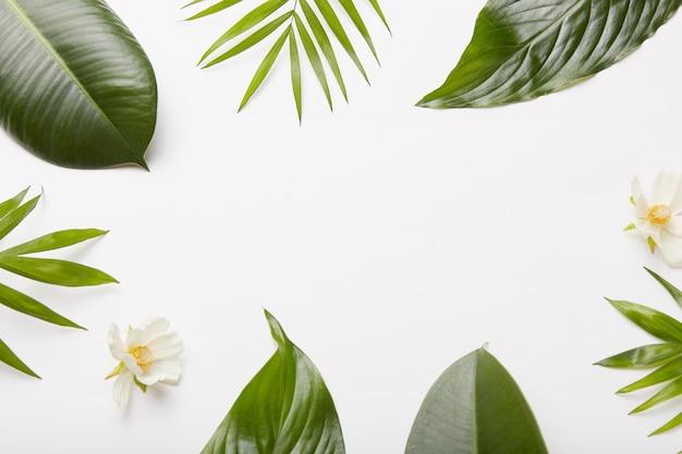 花の組成物。植物の緑の葉、シダ、白い壁のフレームに対する美しい花、プロモーションコンテンツや情報のショットの真ん中にある空白