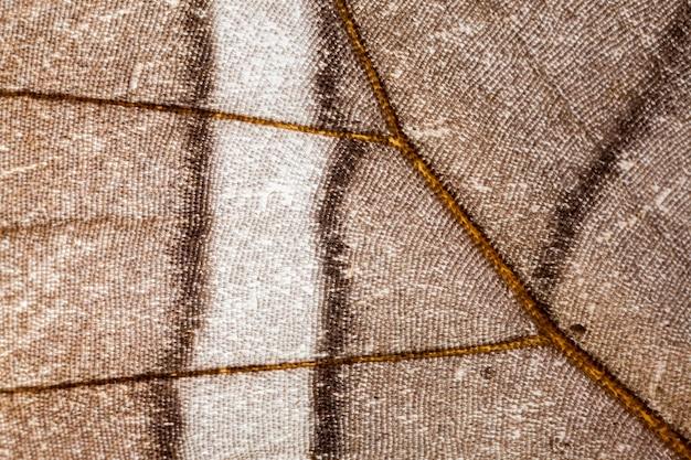 Деталь крыла бабочки с чешуей