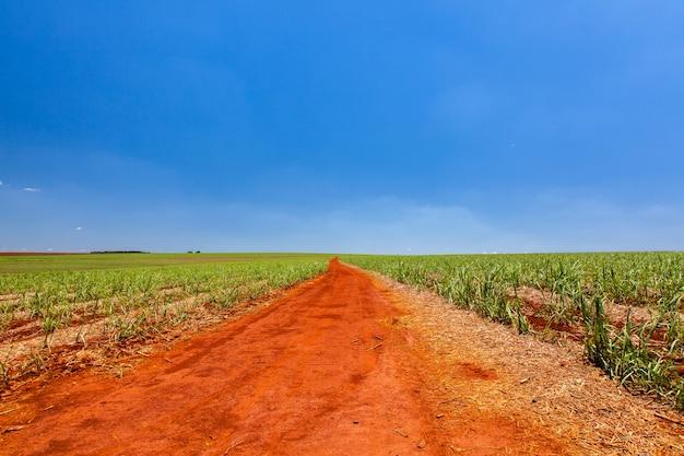 Сельская оранжевая грязная улица в плантации сахарного тростника с голубым небом и далеким горизонтом