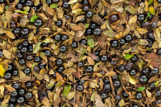 地面に落ちた熟したヤボティカバがたくさん-平らに置かれた本格的な果物