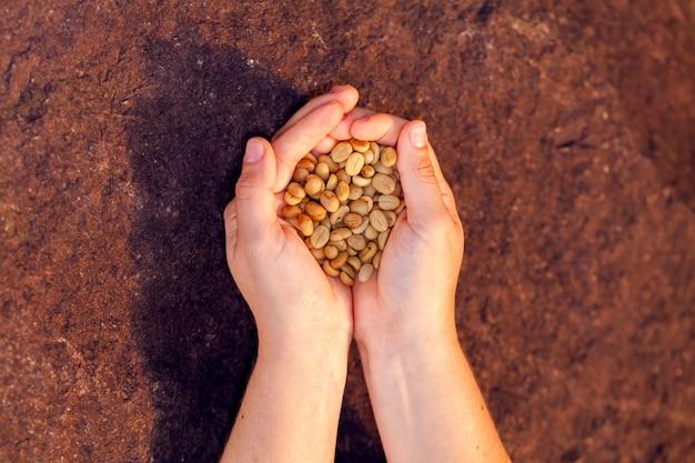 Руки держат необжаренные органические кофе в зернах - кофе арабика