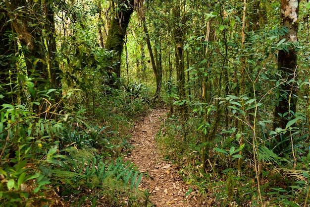 南アメリカブラジルの空の熱帯雨林の道