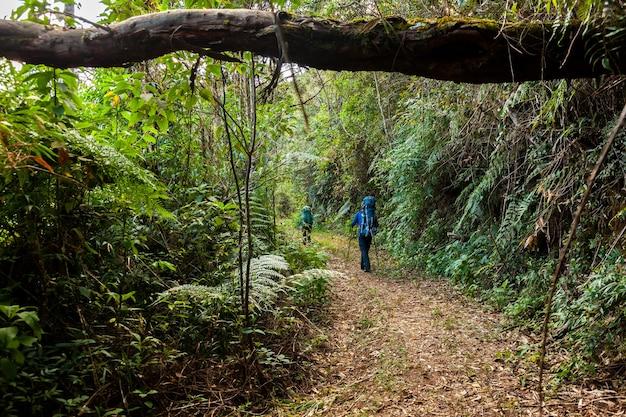 ブラジルの熱帯雨林のトレイルに大きなバックパックを運ぶ人々