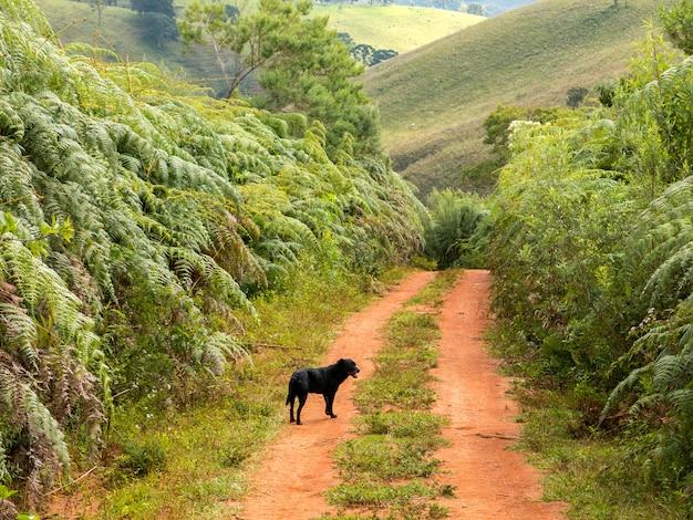 未舗装の田舎道で黒犬