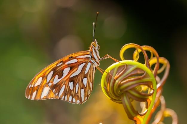 Бабочка на бракен