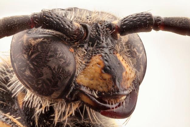 ハチの頭のクローズアップ。マクロ撮影