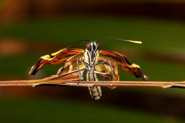 Молодая новорожденная бабочка
