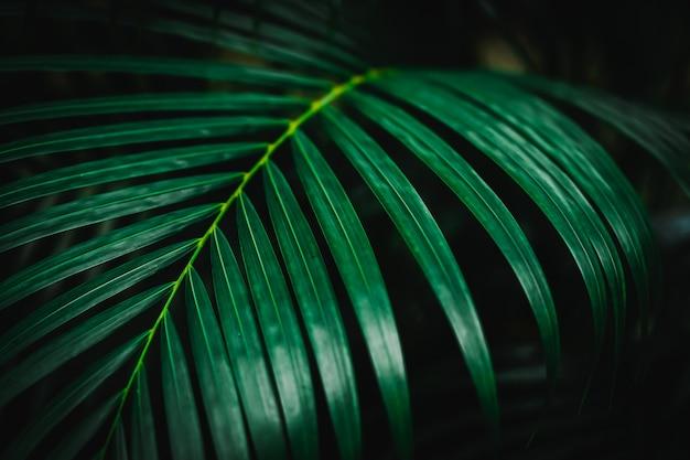 Селективный фокус закрыл тропический летний зеленый лист темный тон фона