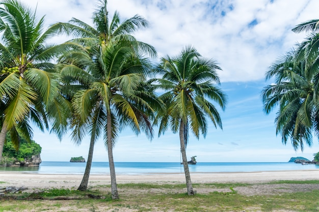 熱帯のビーチとヤシの木と水色の空と夏の白い砂