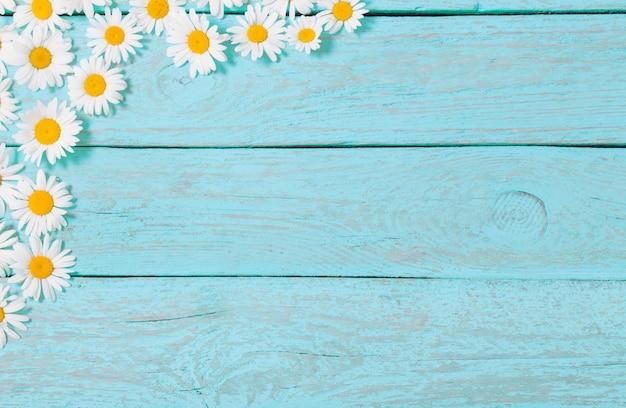 青い木製スペース上のカモミールの花