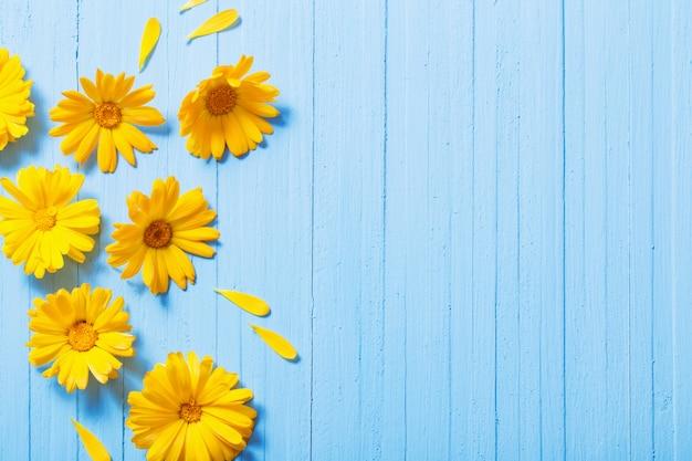 Цветки календулы на синем фоне деревянных