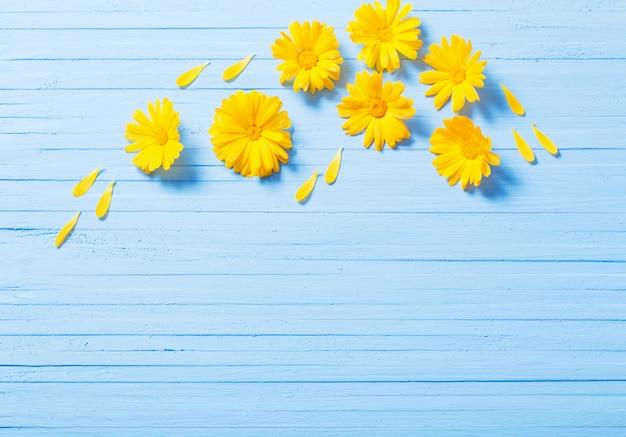 青い木製の背景にキンセンカの花